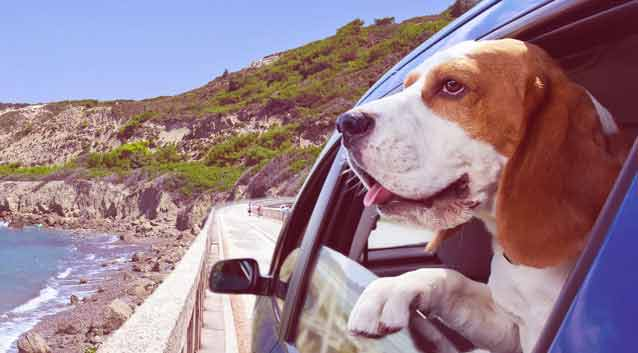 Top 10 Dog-Friendly Vacations Around the World